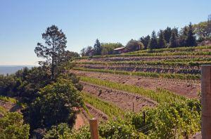 View of Barnett Vineyards