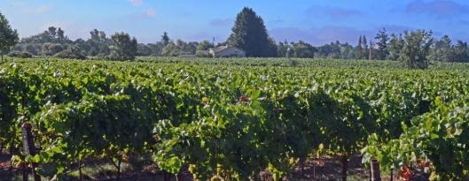 deloach winery