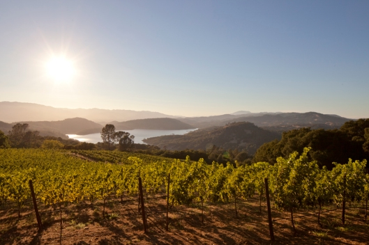 View from Chappellet's vineyards on Pritchard Hill, Napa Valley